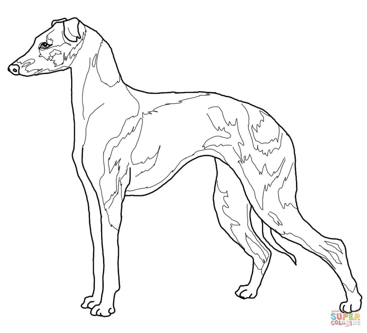Italian Greyhound Coloring Page