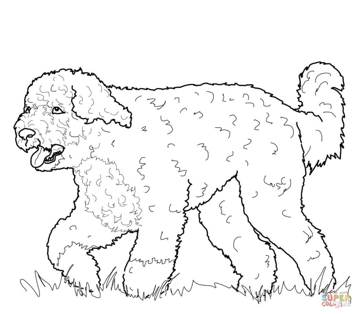 Portuguese Water Dog Coloring Page