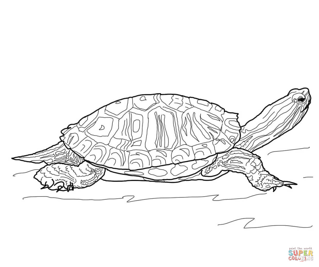 baby turtle coloring page free printable coloring pages