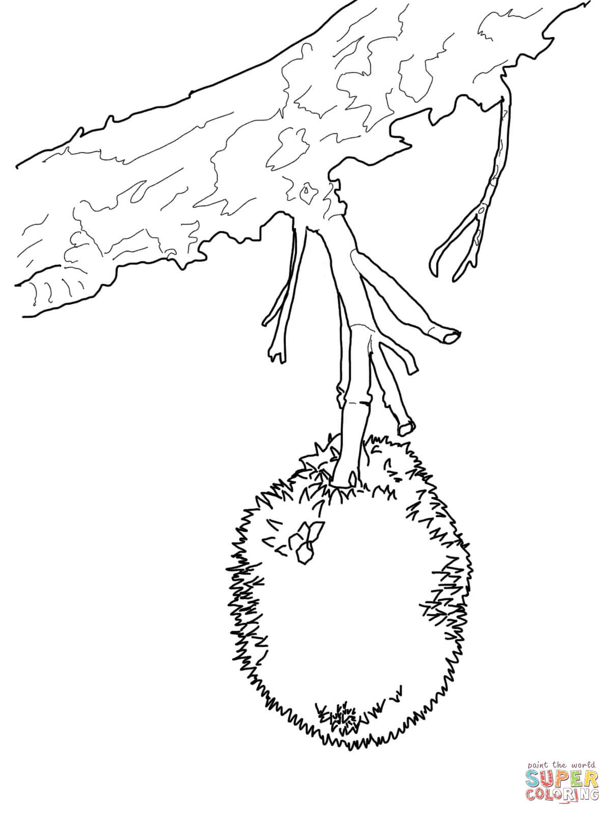 Durian On Tree Coloring Page Free Printable Coloring Pages