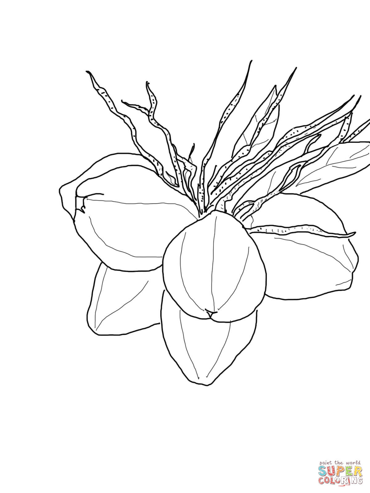 Coconut Palm Tree Coloring Page. tree coloring pages palm tree ...