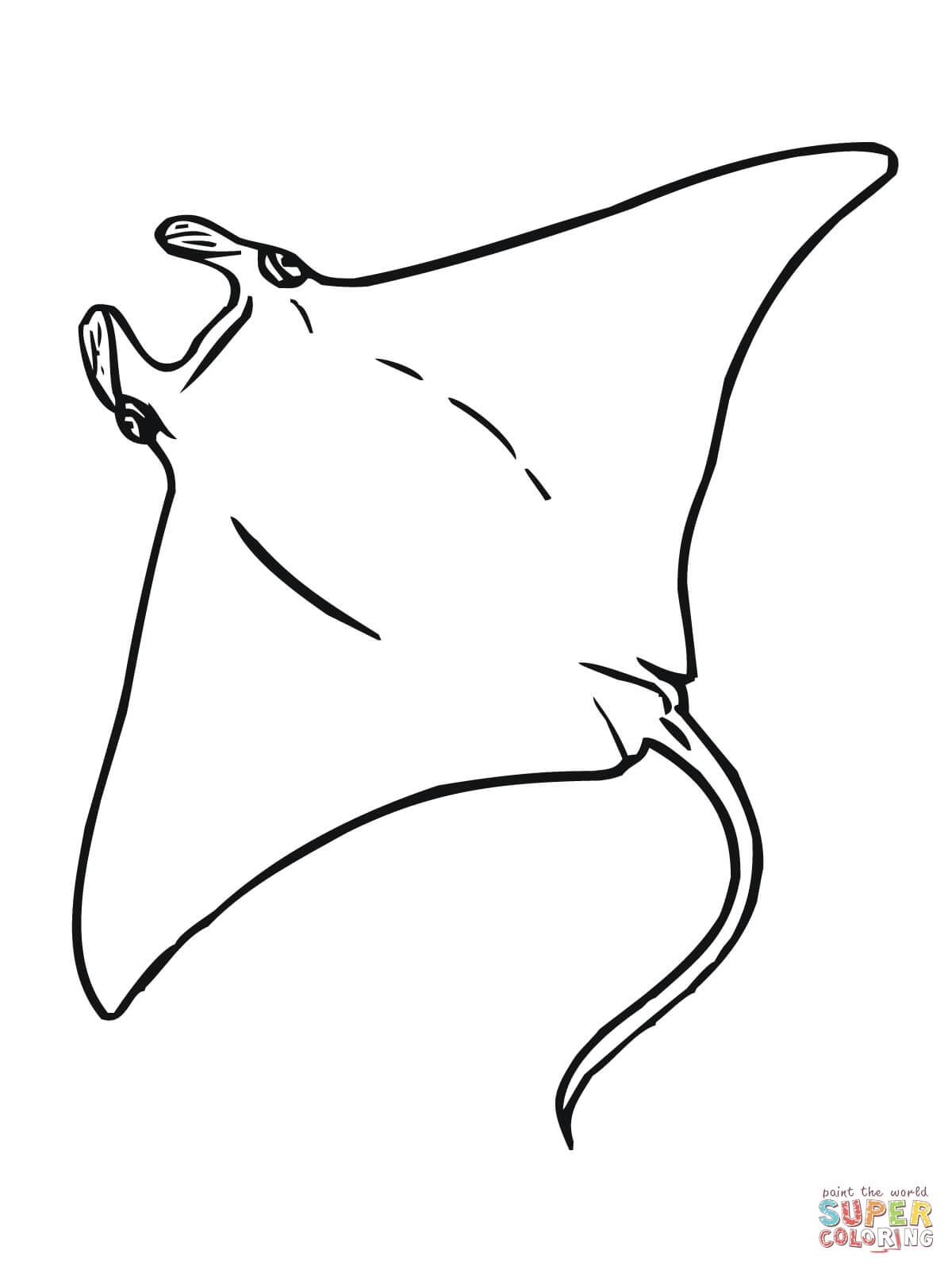 Manta Coloring Page