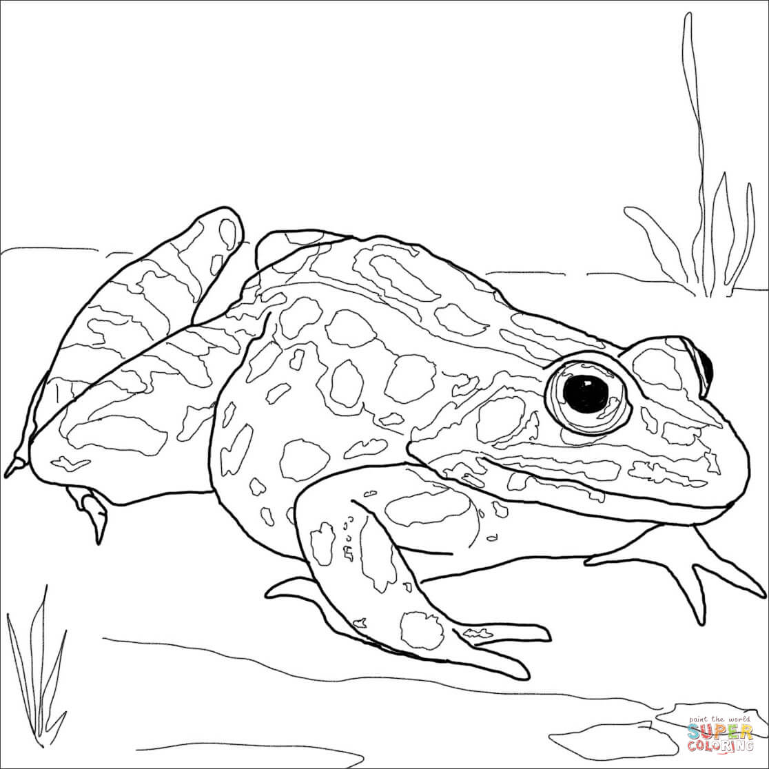 Free Worksheet Frog And Toad Together Worksheets frog and toad together coloring pages frogs co related free pages