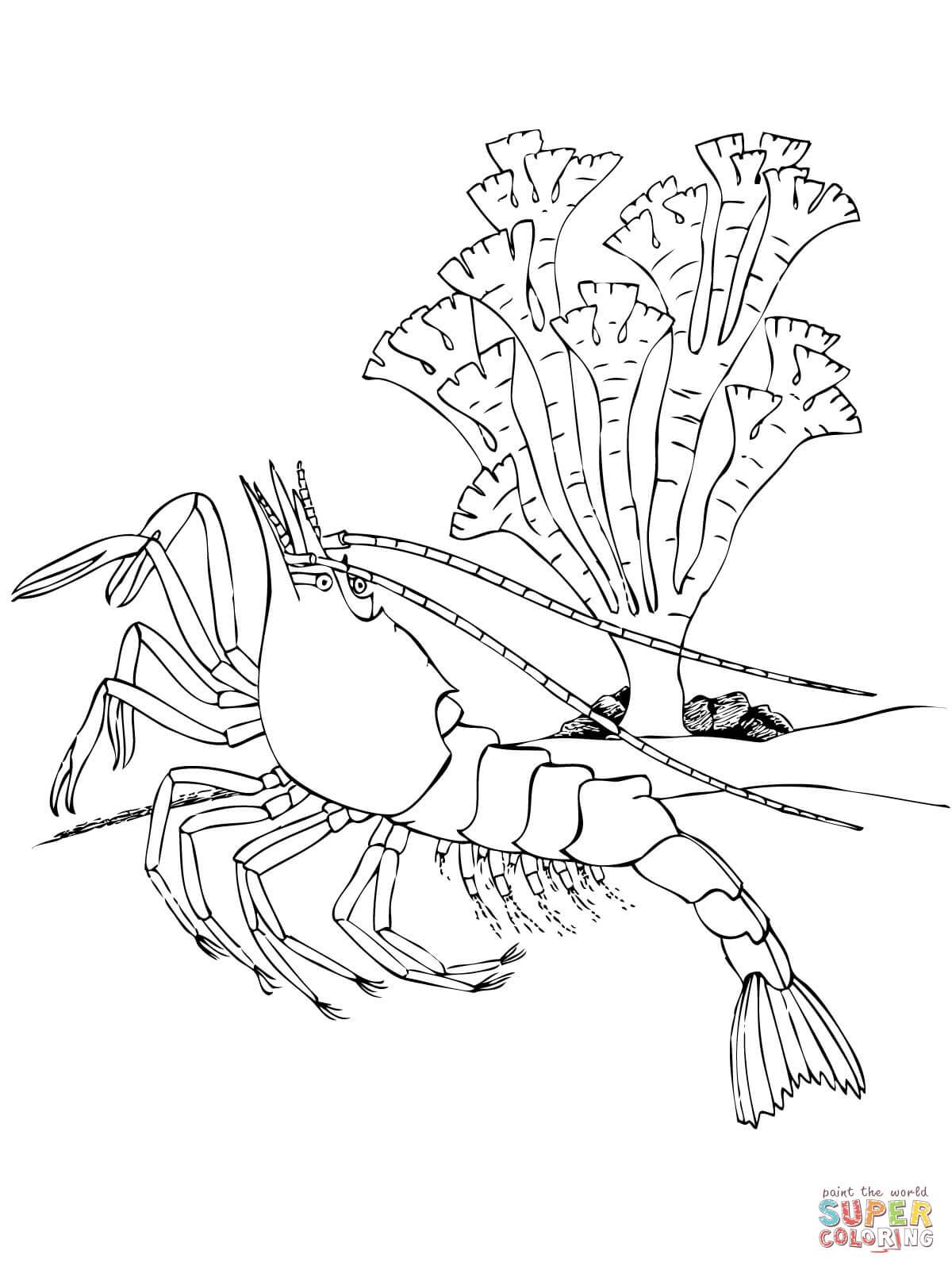 Shrimp Decapod Crustacean Coloring Page Free Printable