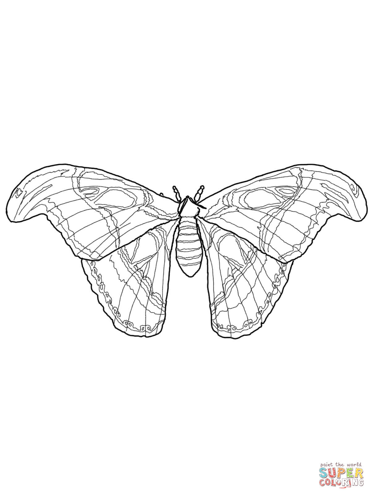 silkworm moth caterpillars coloring page free printable coloring