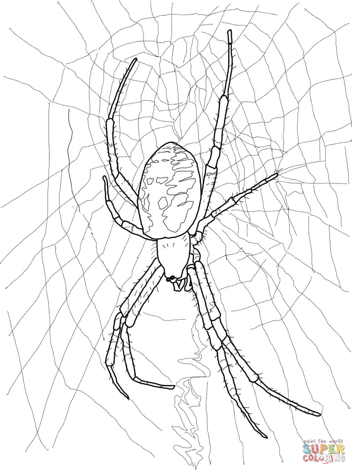 daring jumping spider coloring page free printable coloring pages