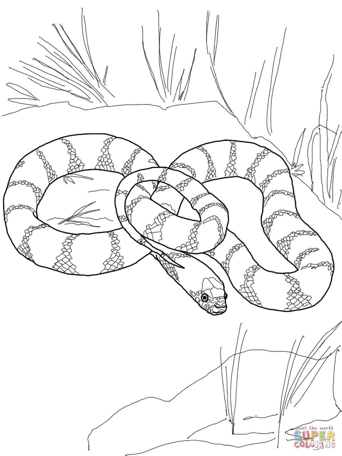 realistic snakes coloring pages free coloring pages