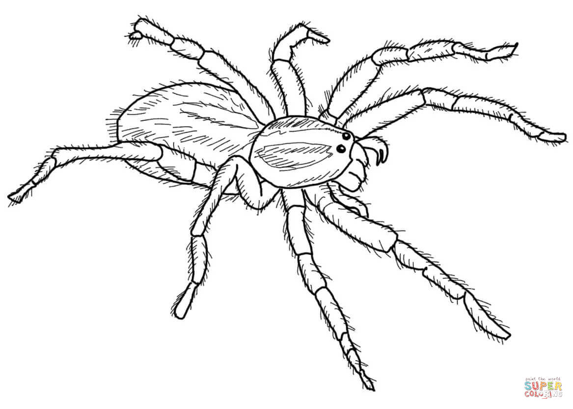 carolina wolf spider coloring page free printable coloring pages