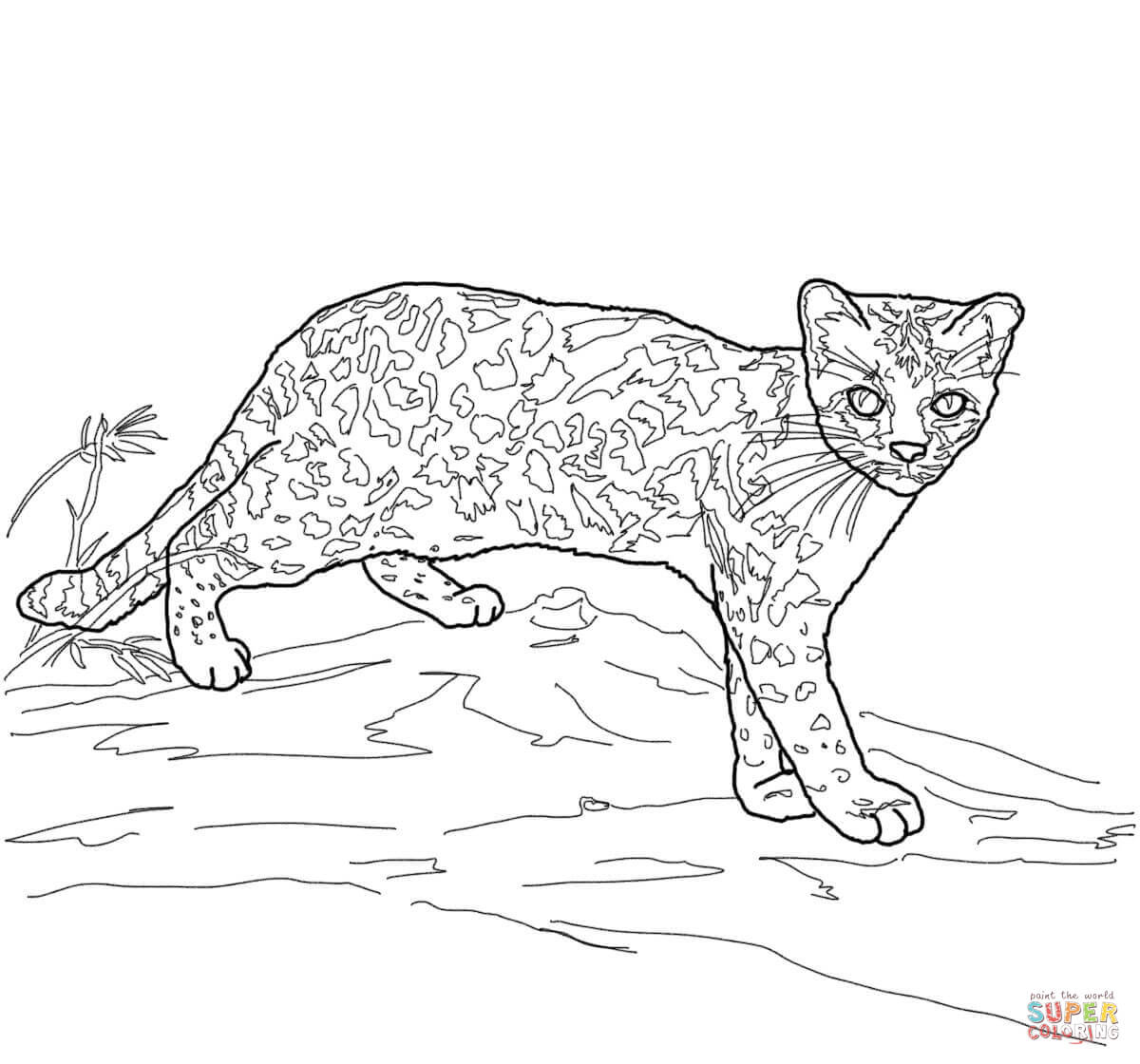 serval african wild cat coloring page free printable coloring pages