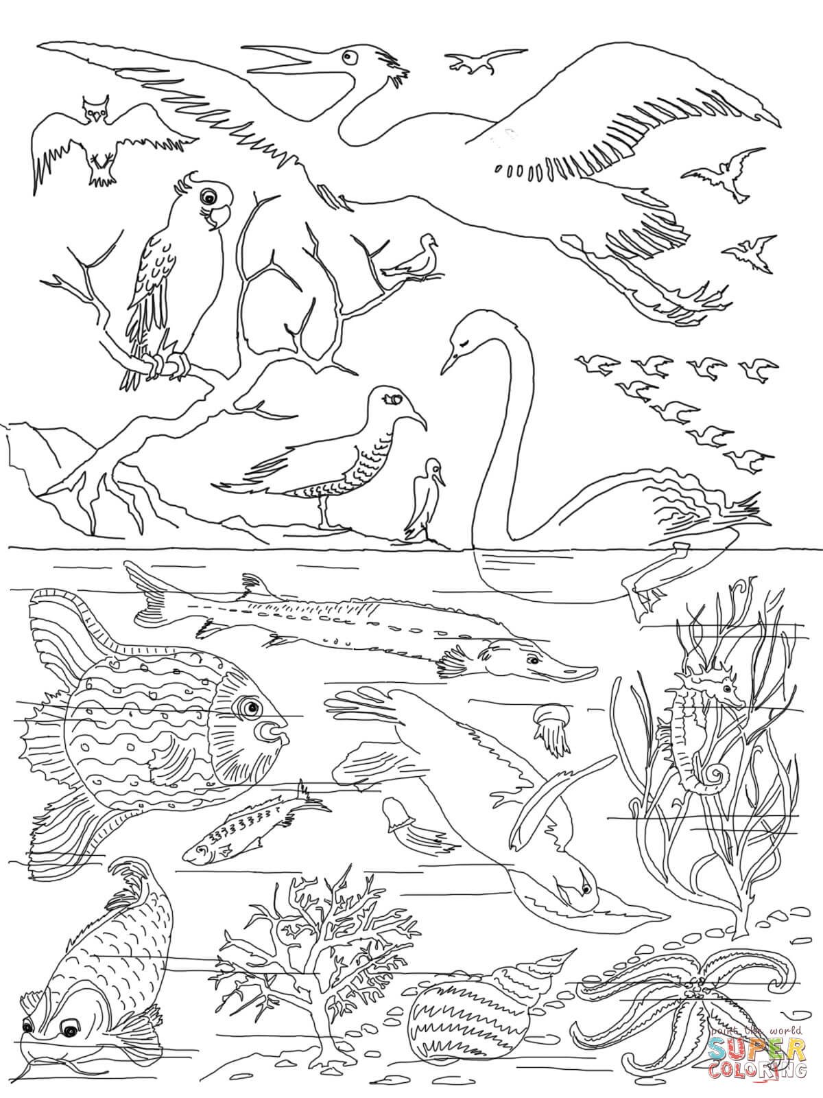 5th Day Of Creation Coloring Page