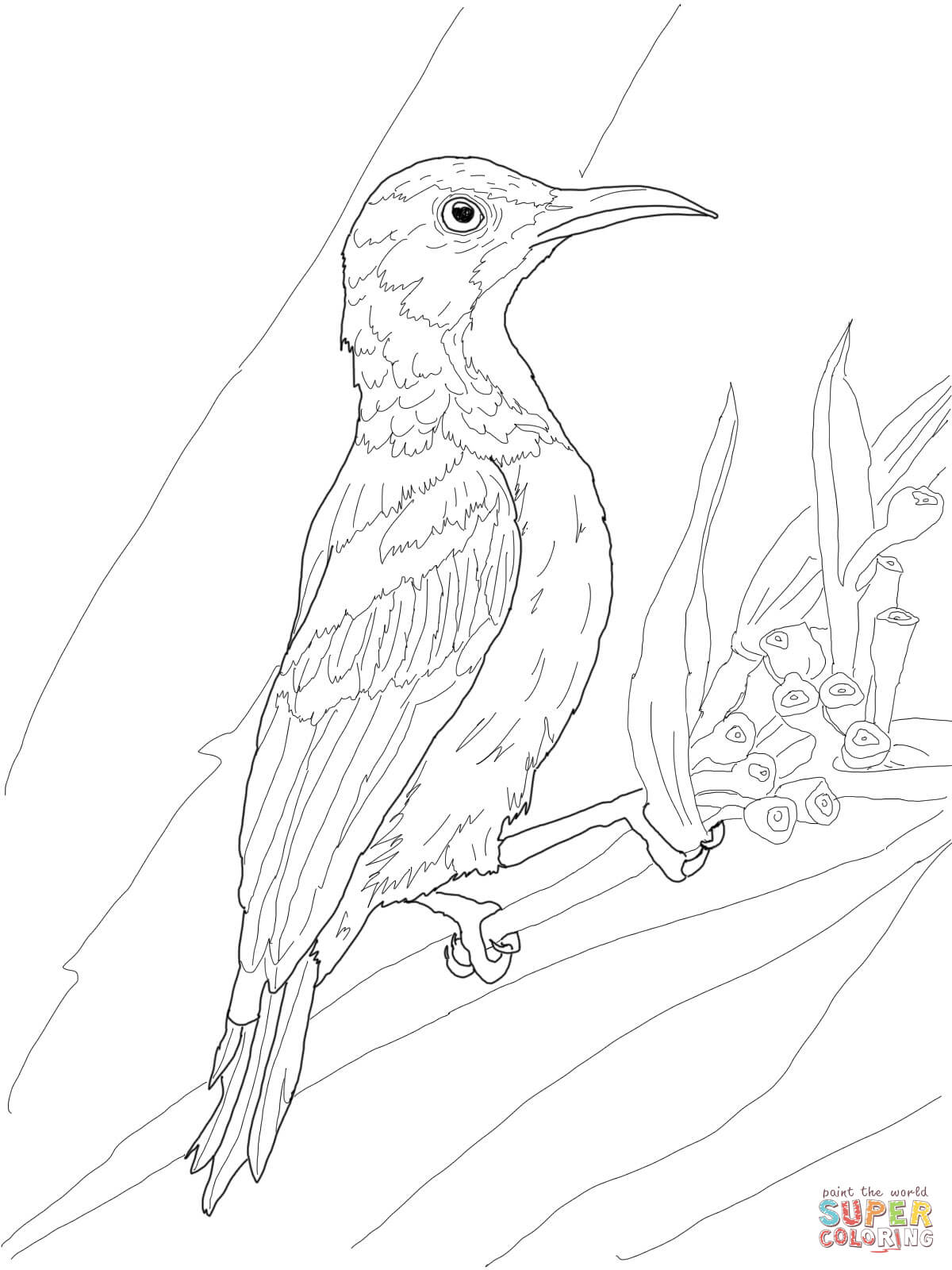 Brown Throated Sunbird Coloring Page