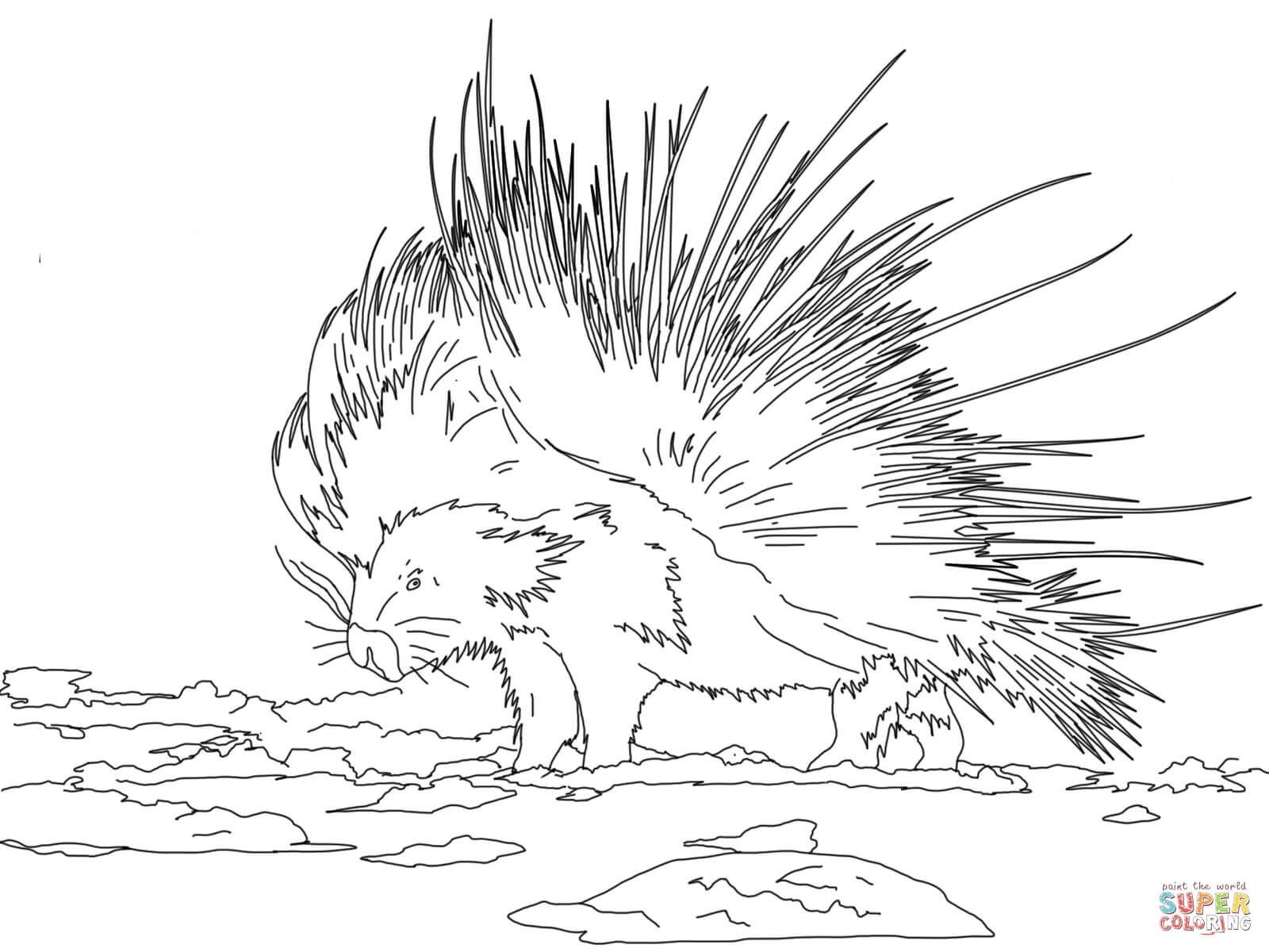 porcupines coloring pages free coloring pages