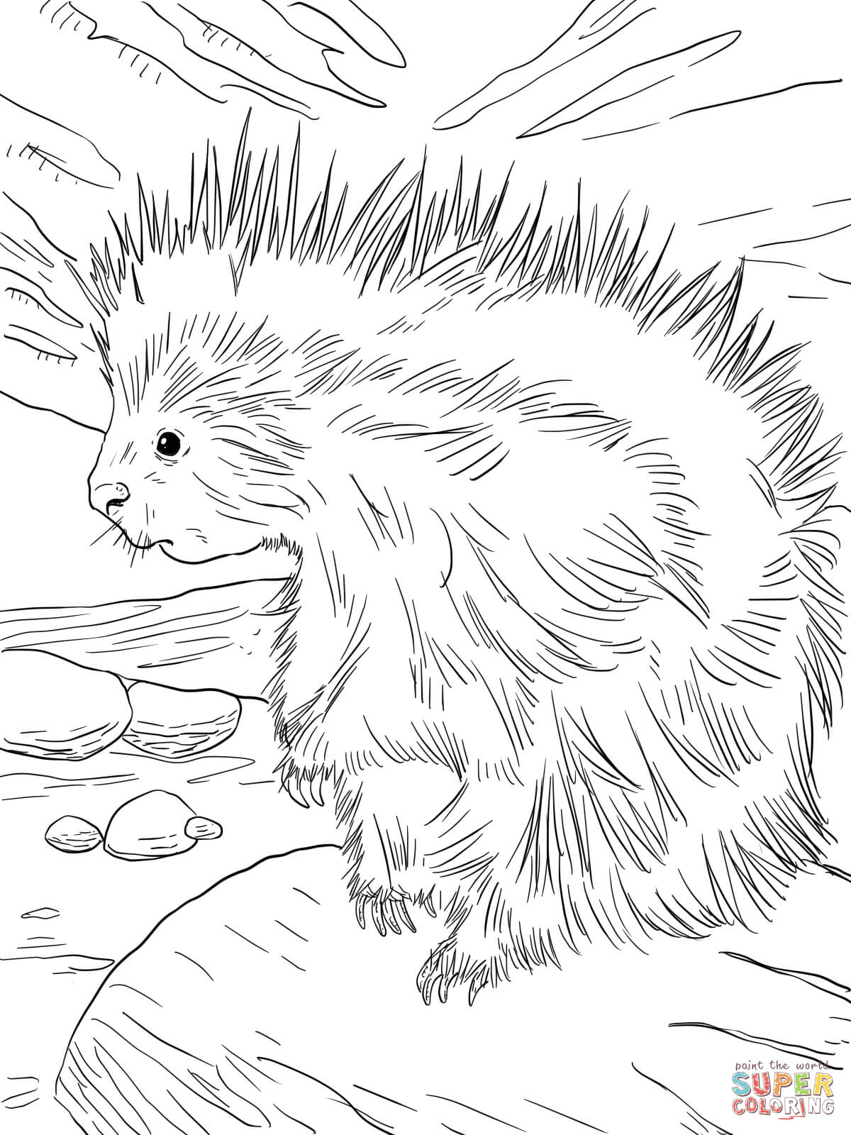 cute north american porcupine coloring page free printable