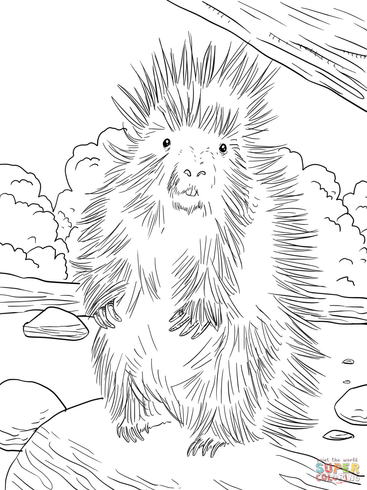 north american porcupine coloring page free printable coloring pages