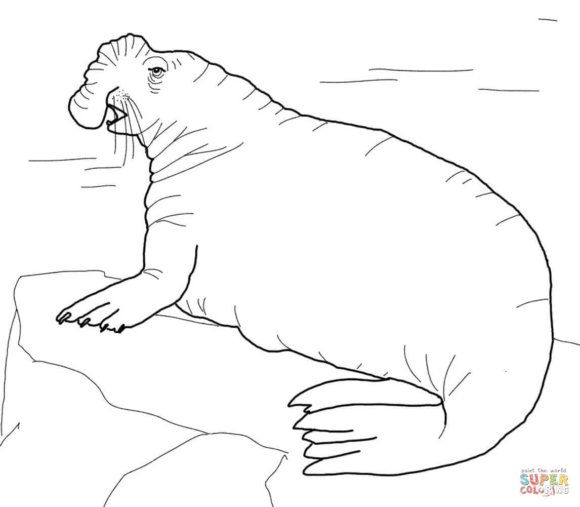 Coloring Page With Example. Mother Seal With Her Cute Baby. Stock ... | 1001x1146