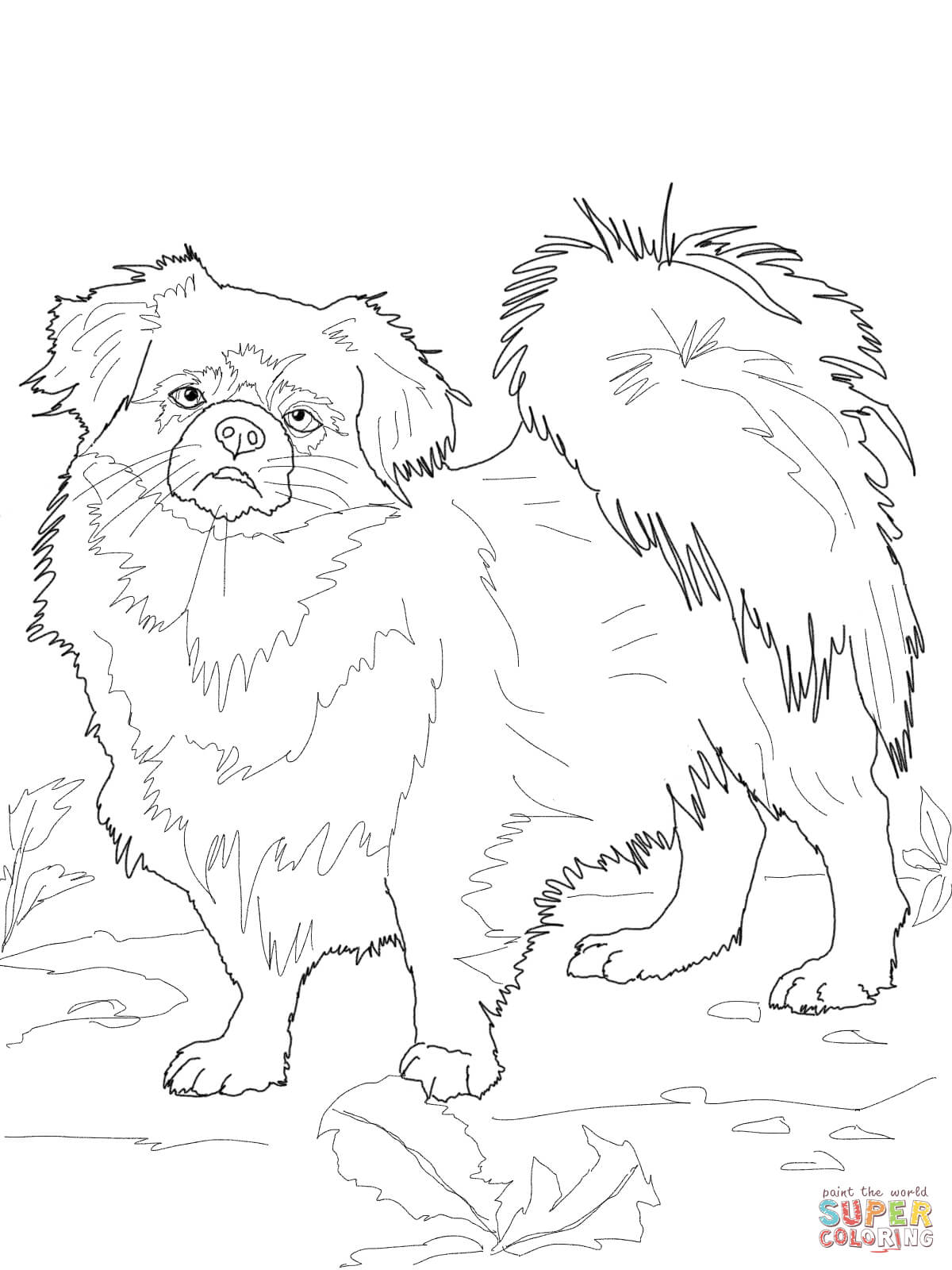 chihuahua coloring page free printable coloring pages