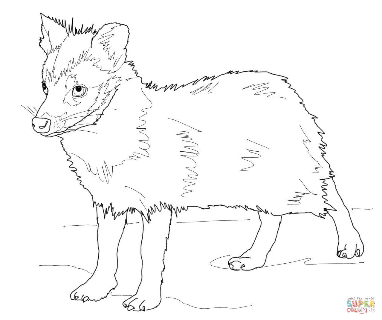 Young Racoon Dog Coloring Page