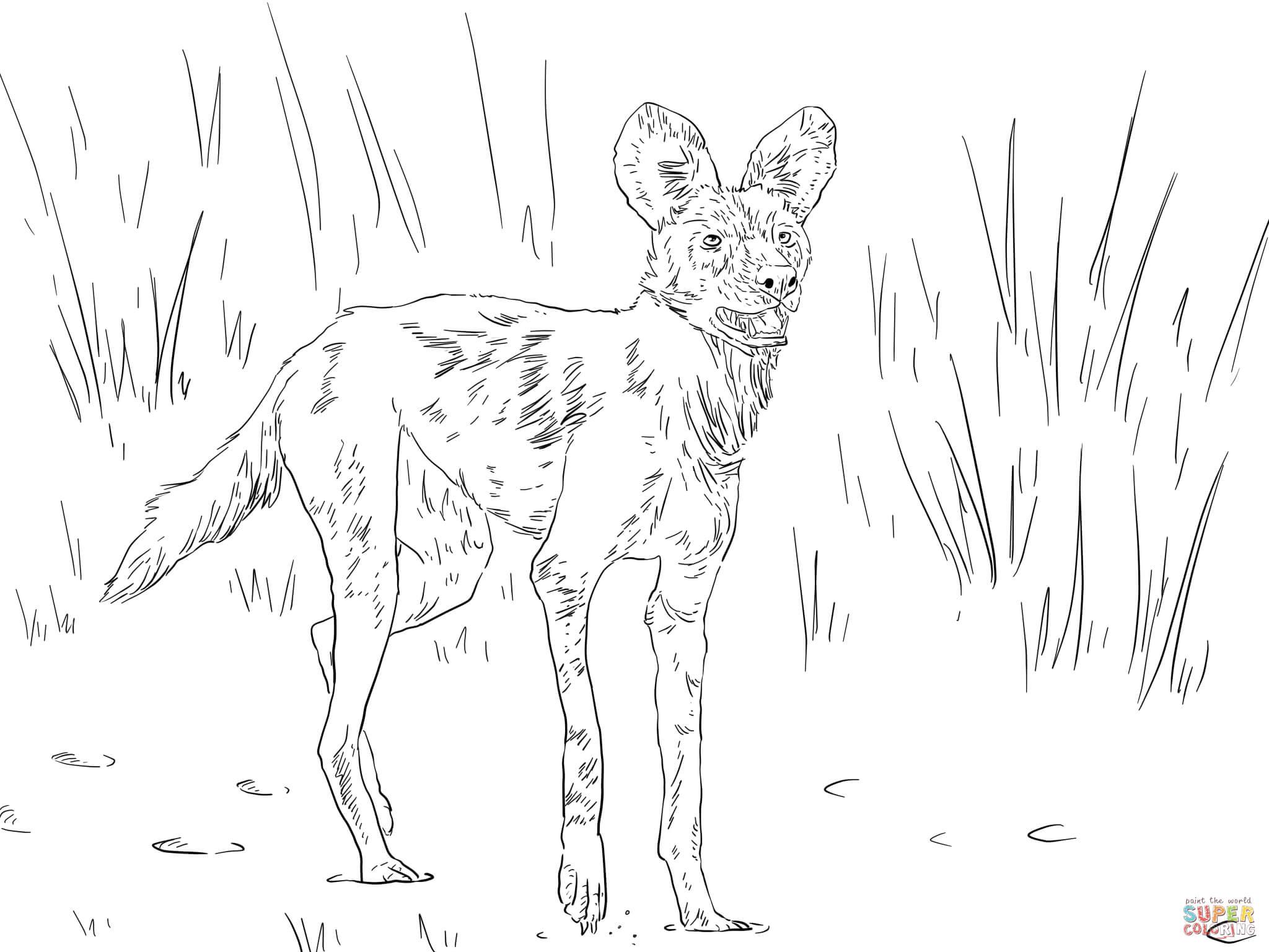 Afrikaanse Wilde Hond Of Sierwolf Kleurplaat