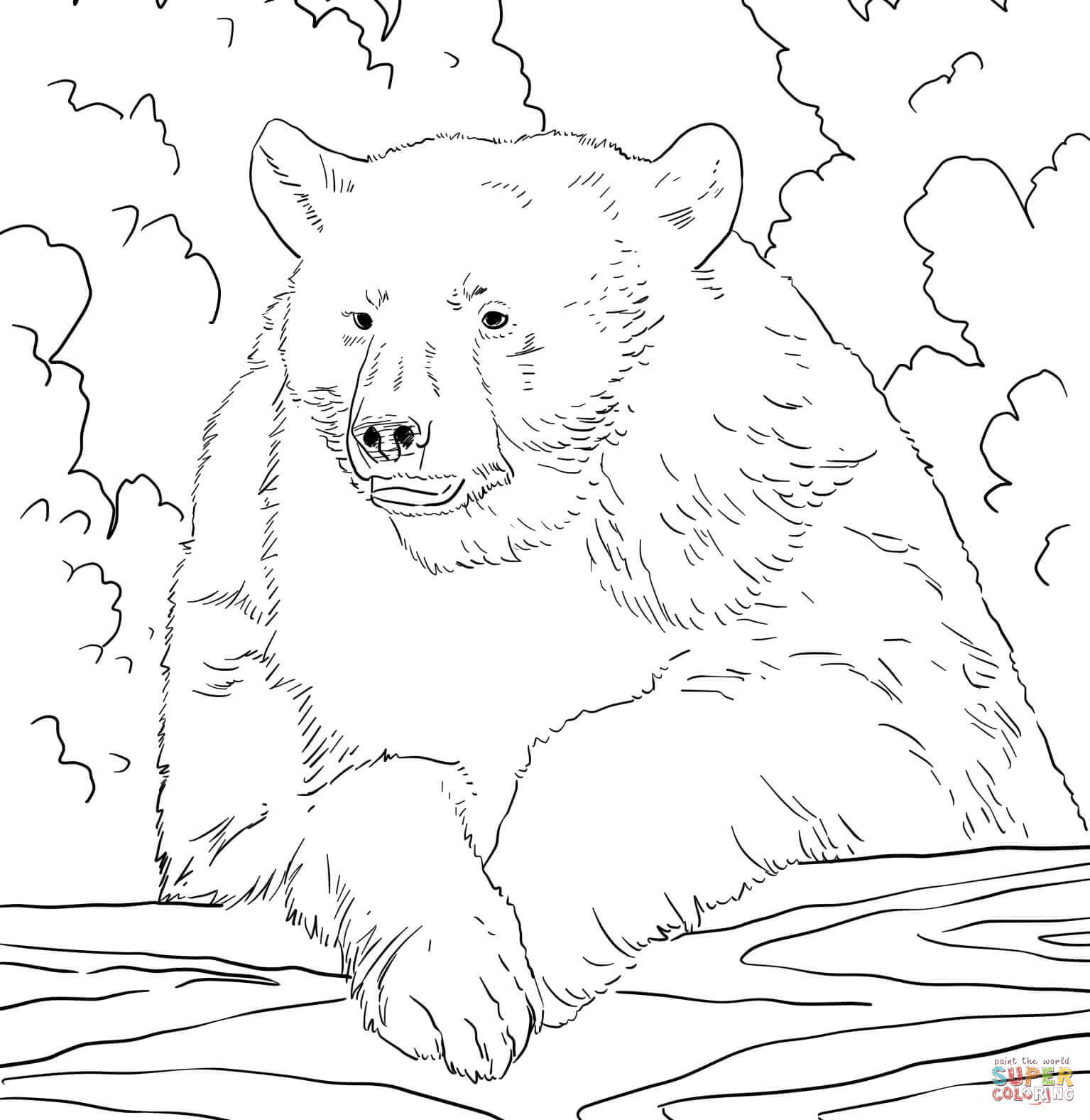realistic american black bear coloring page free printable