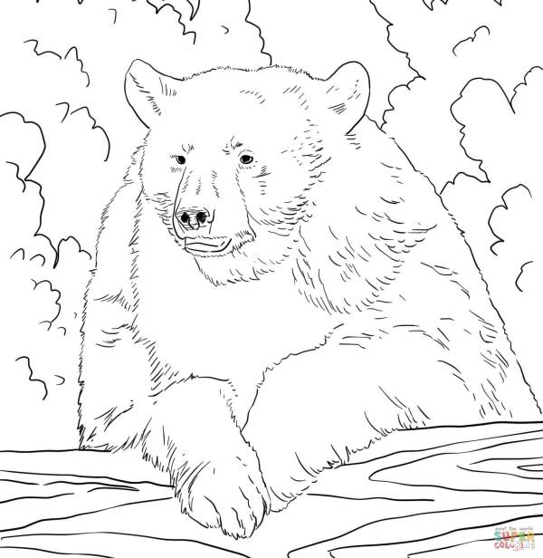 coloring pages of bears # 7