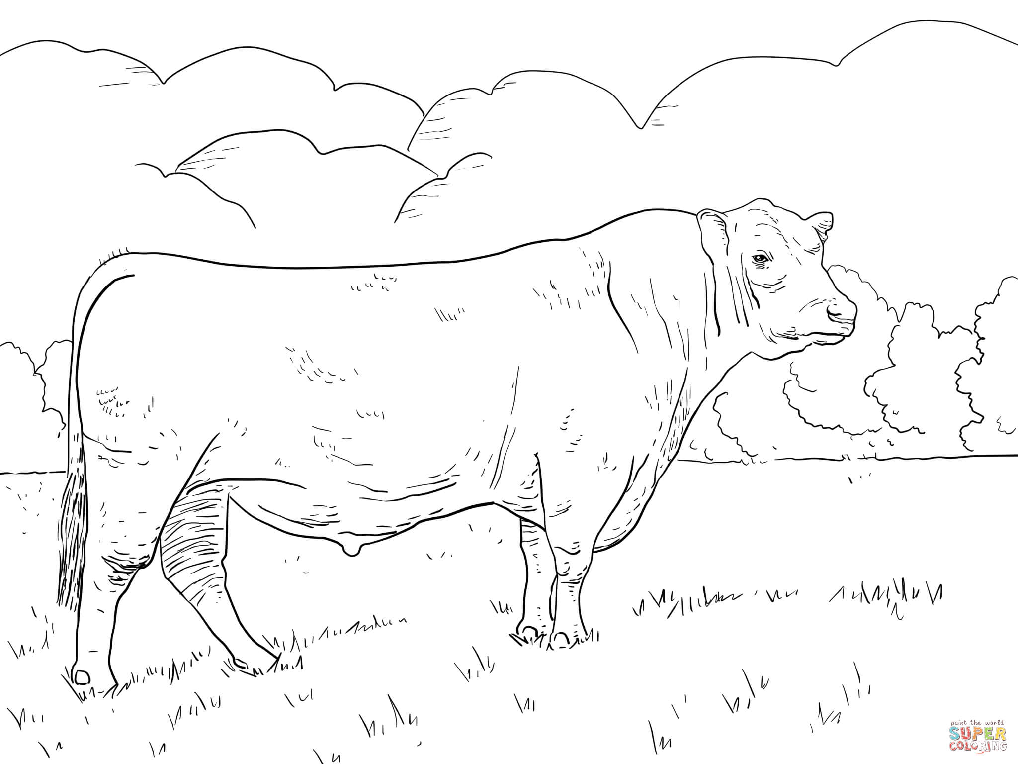 Angus Bull Coloring Page