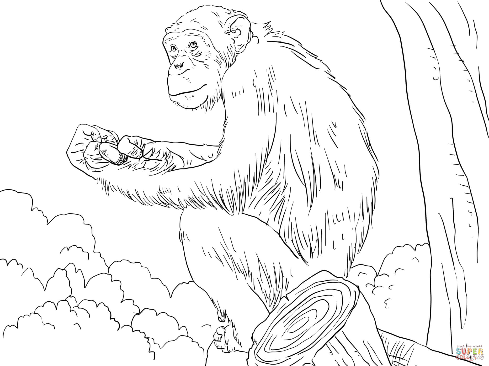 chimpanzee coloring pages free coloring pages