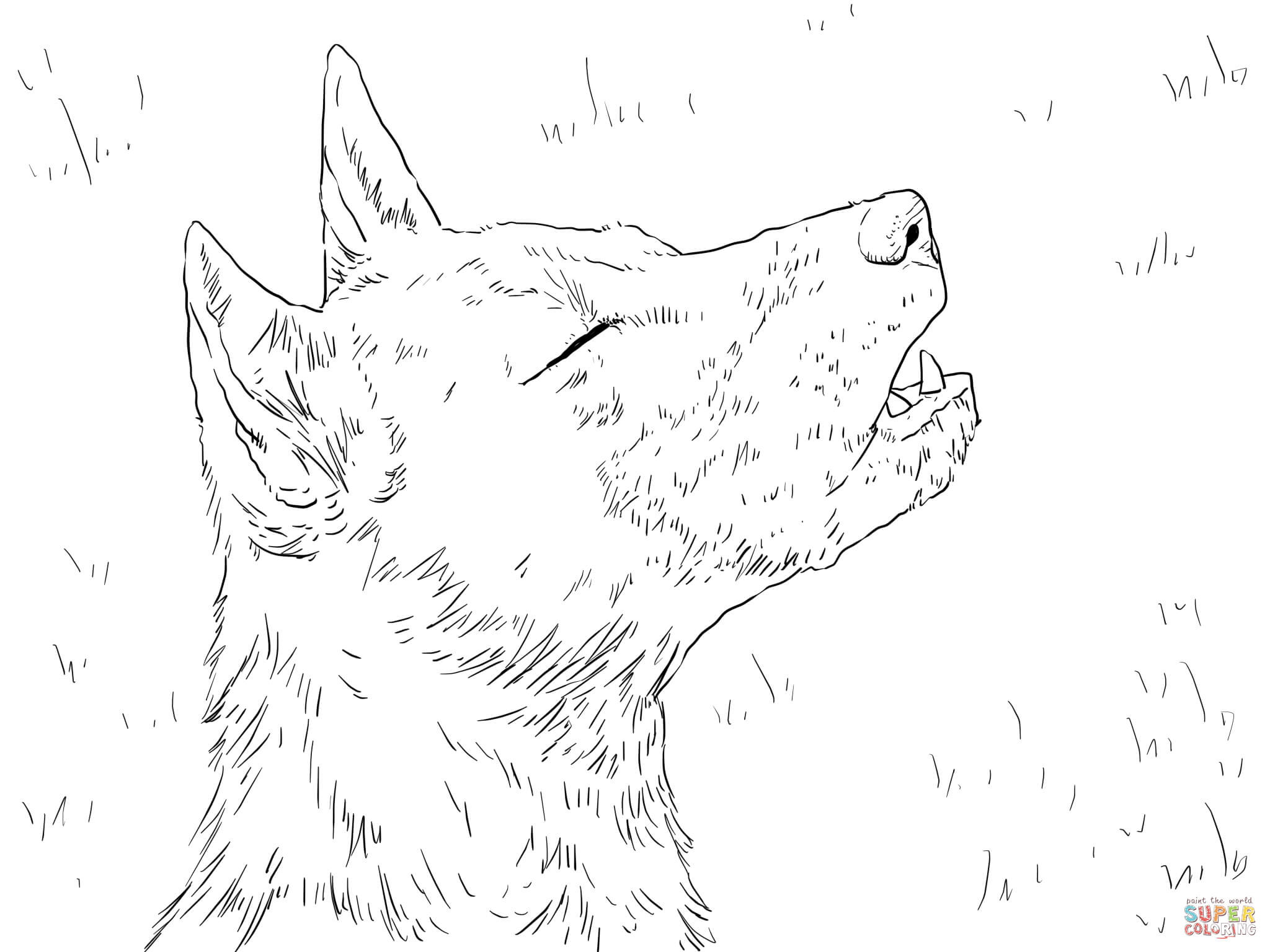 New Guinea Singing Dog Portrait Coloring Page