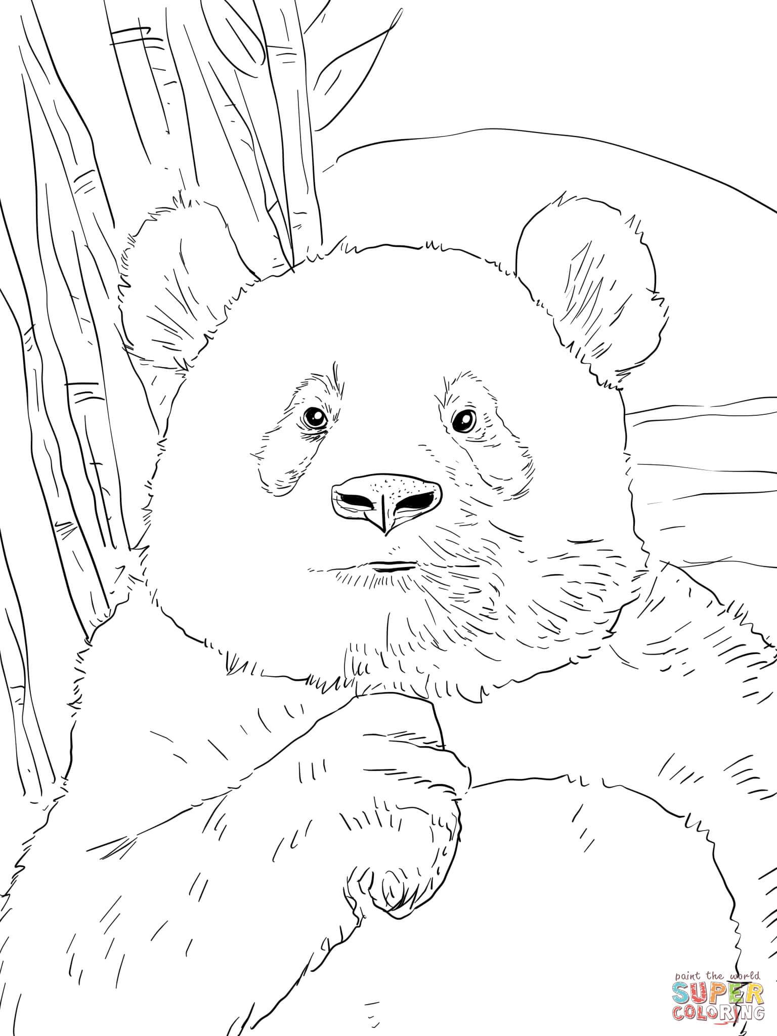 Panda Portrait Coloring Page
