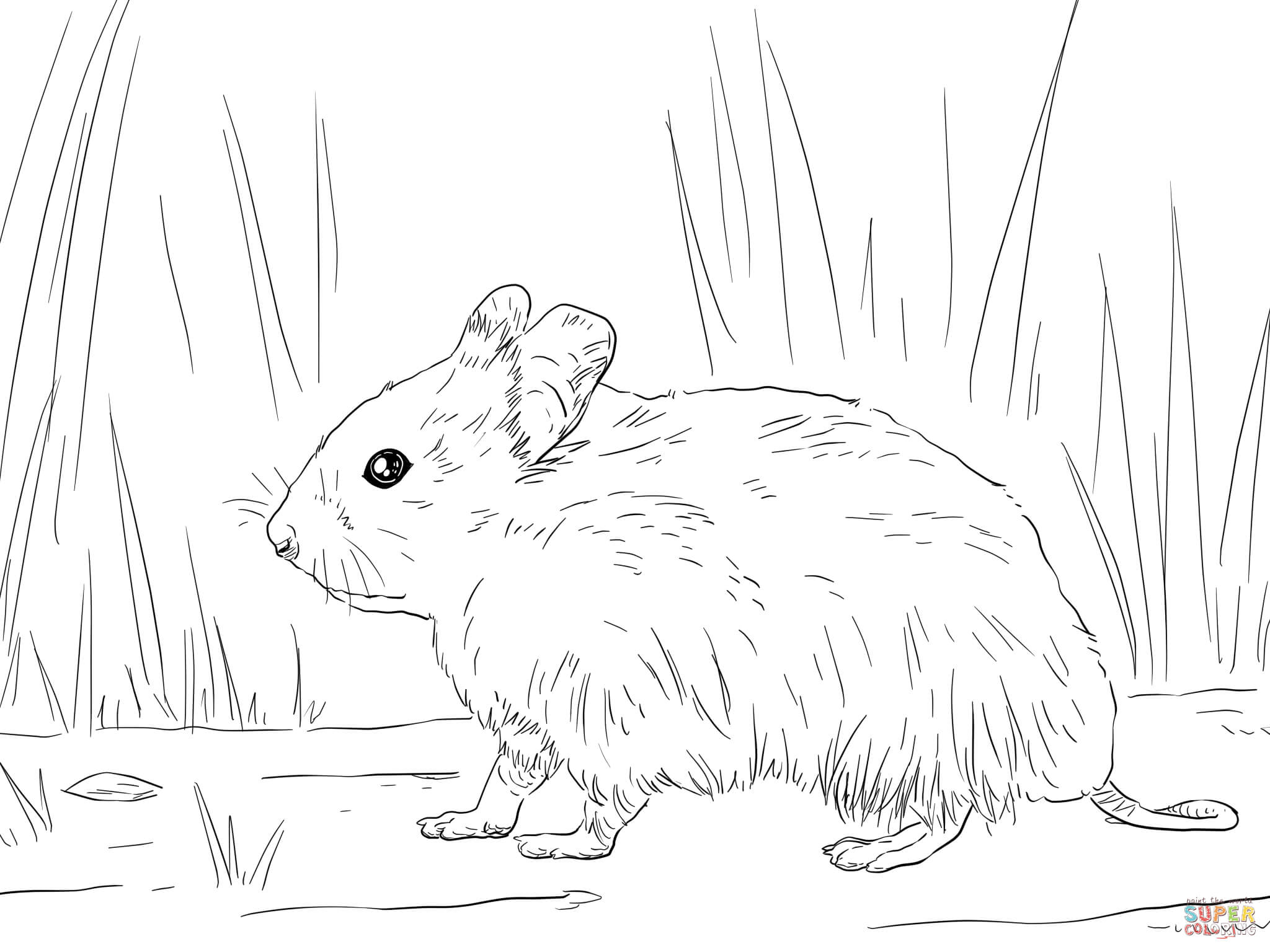 syrian hamster coloring page supercoloring com