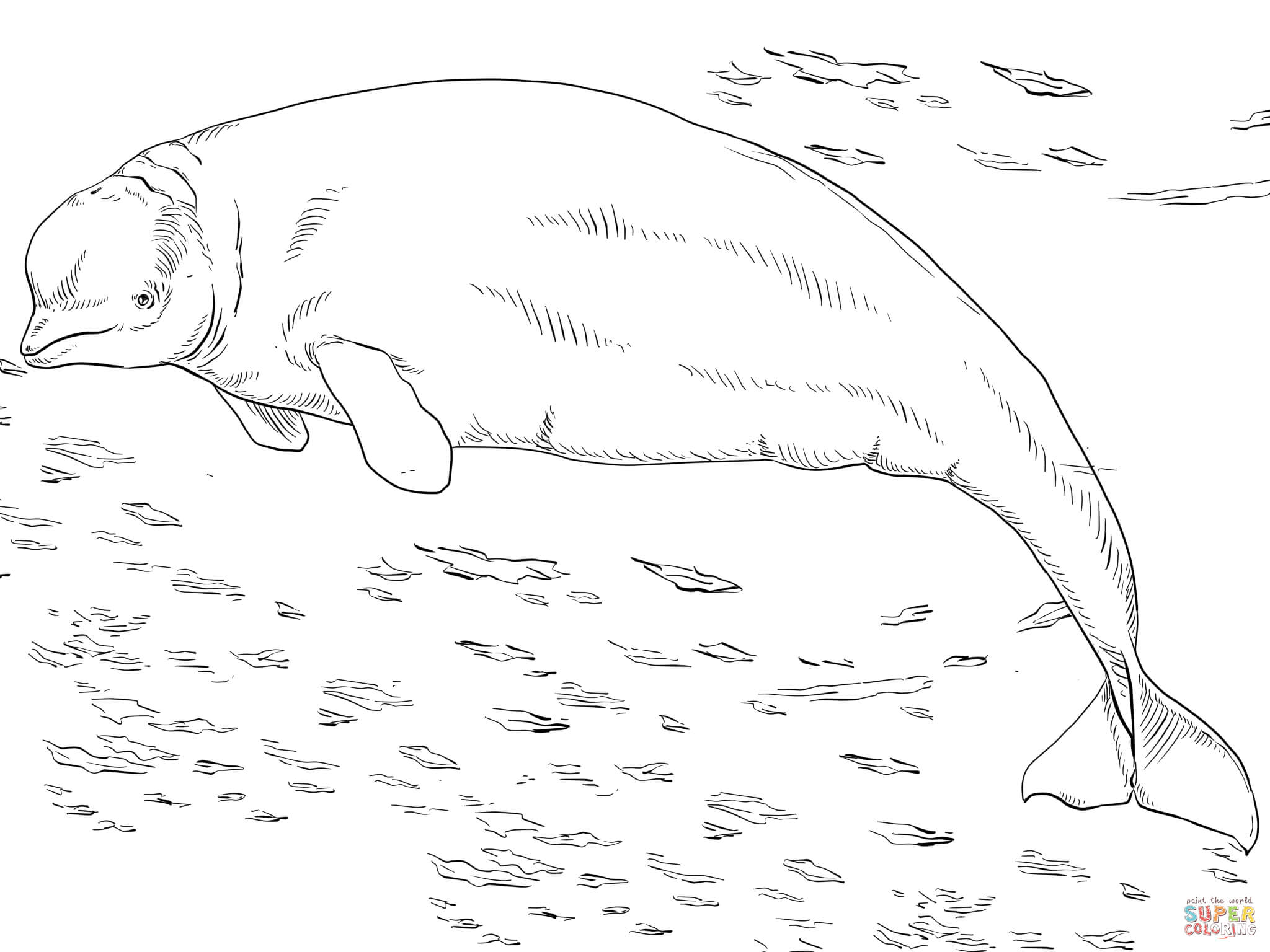 Beluga Or White Whale Coloring Page Free Printable