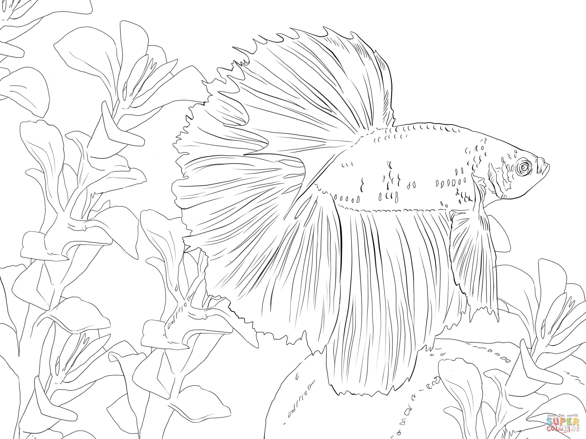 Betta Fish Coloring Page