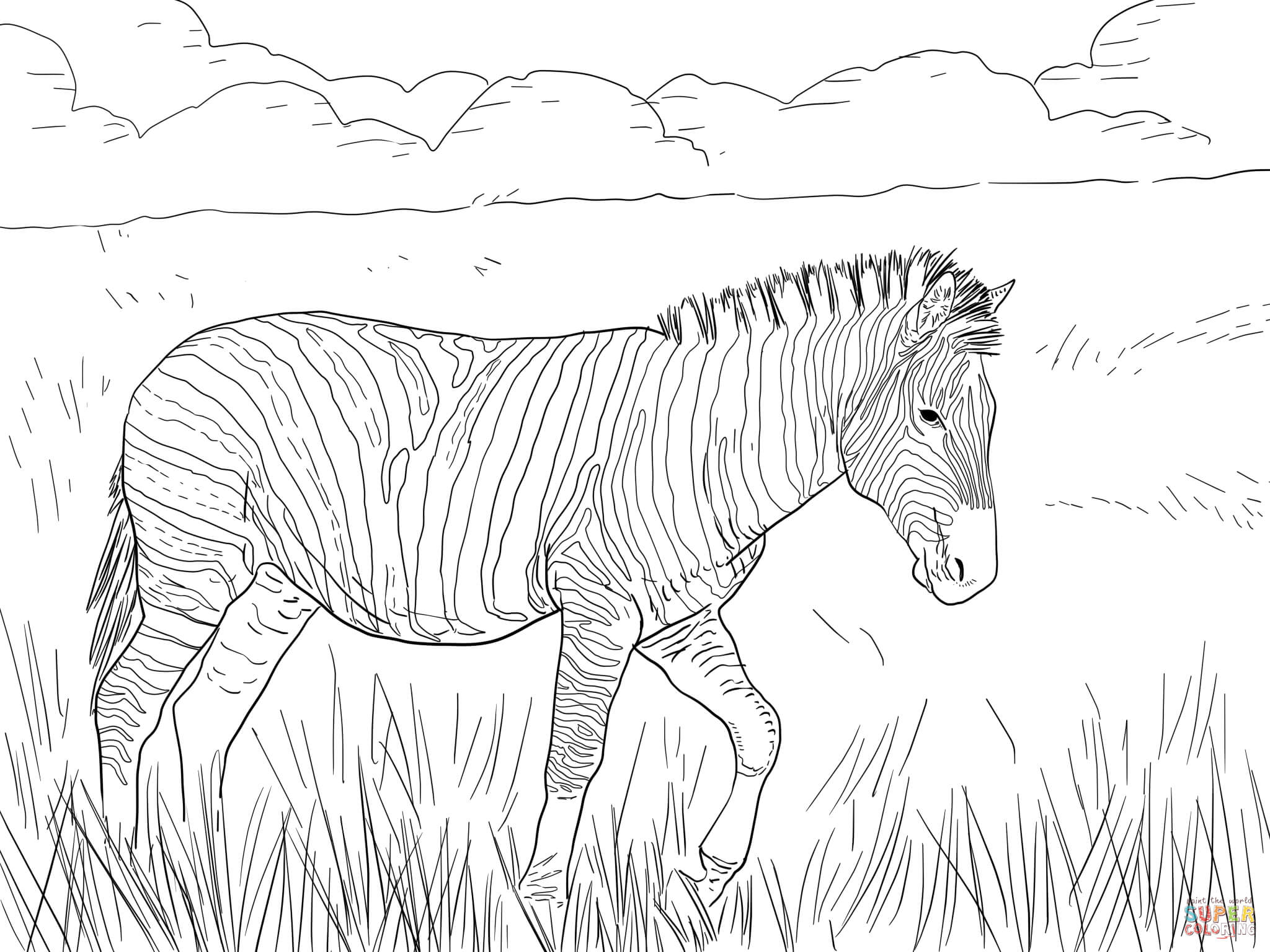 burchell 39 s plain zebra coloring page free printable coloring pages