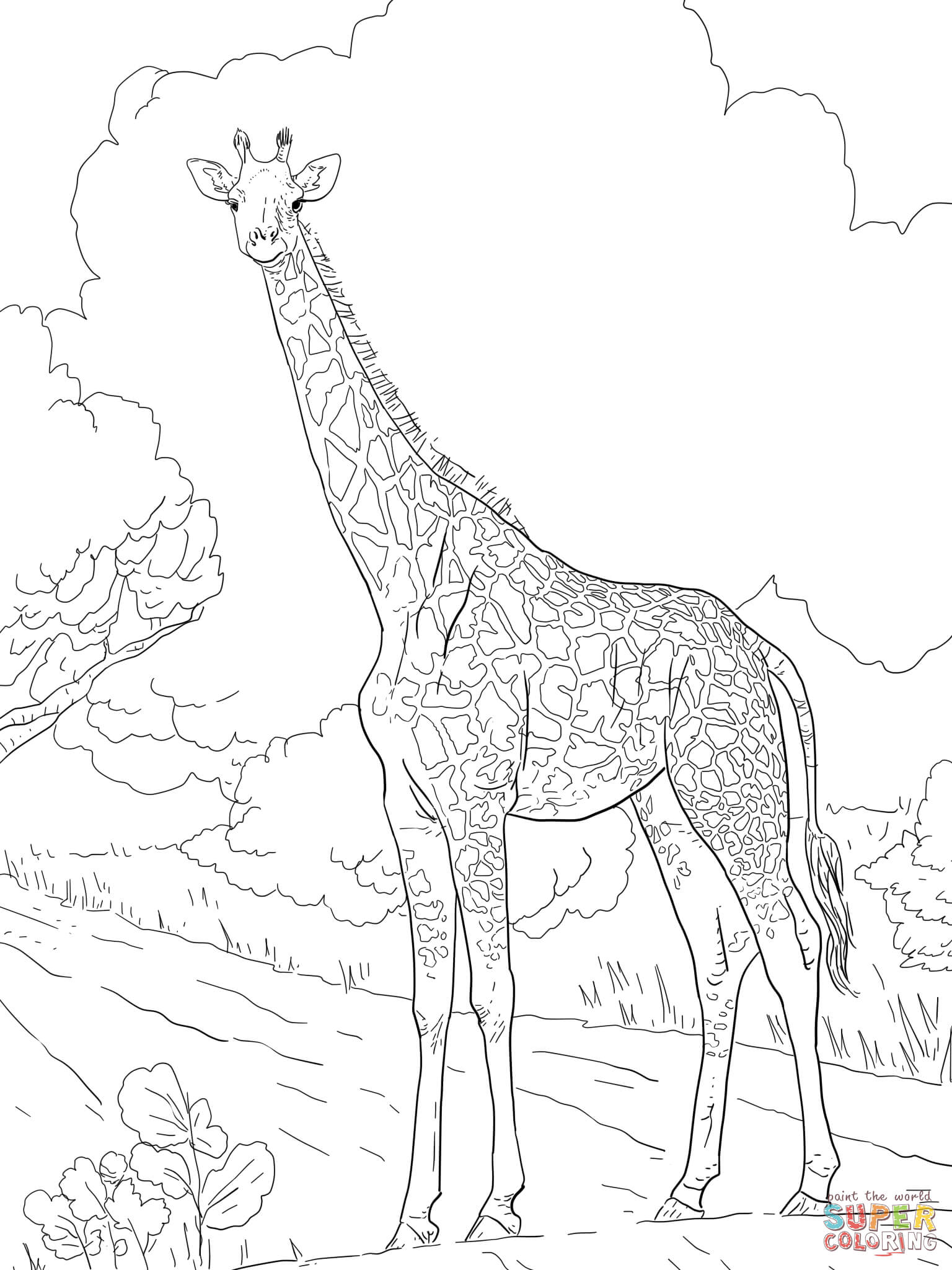 female masai giraffe coloring page free printable coloring pages