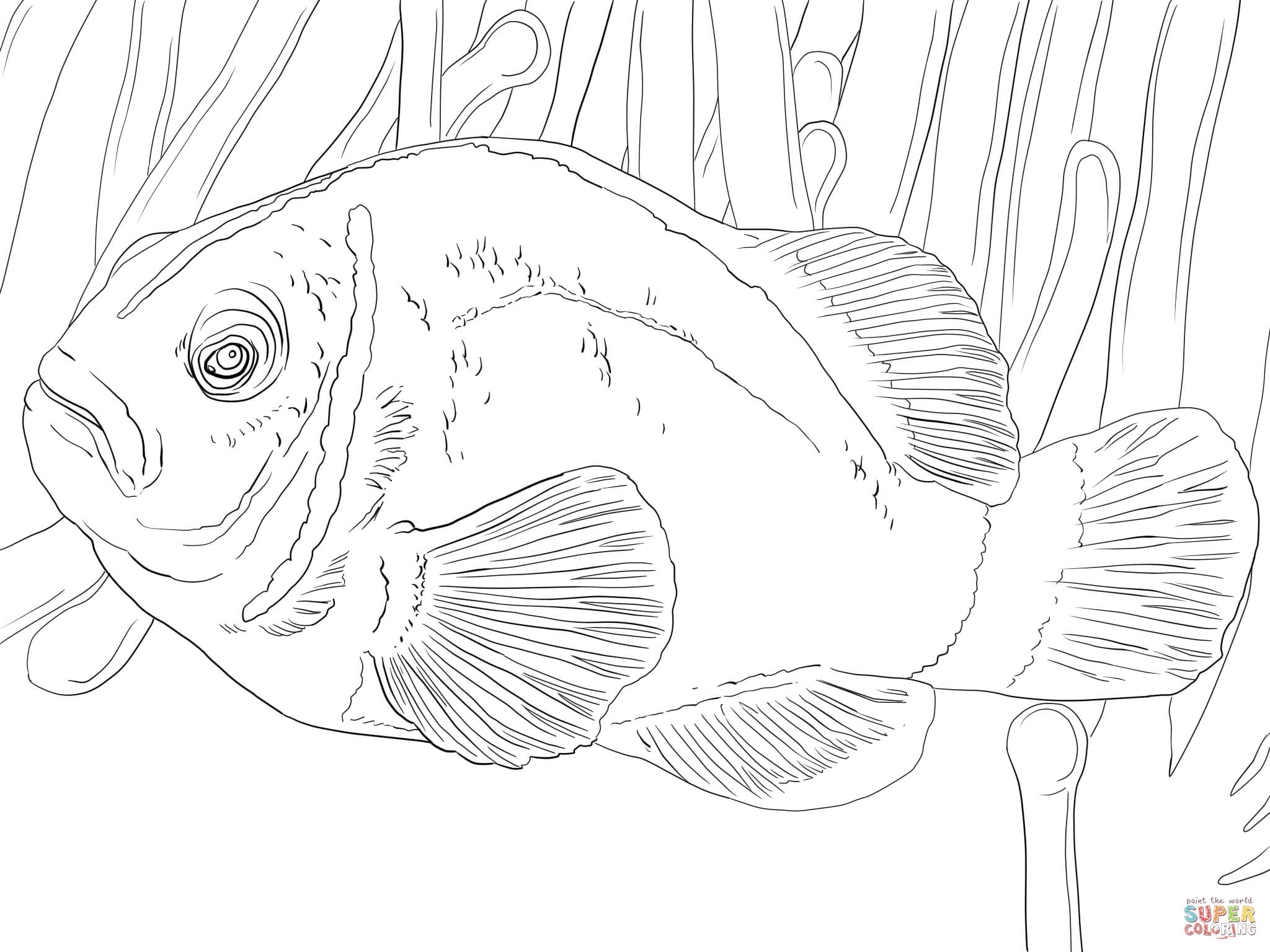 pink skunk clownfish coloring page free printable coloring pages