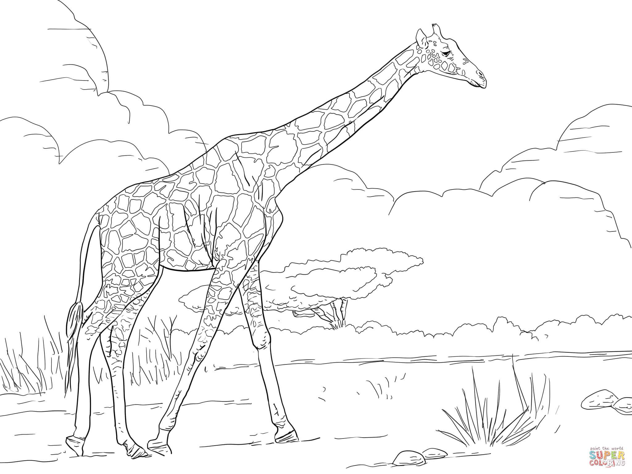 Coloring Worksheet Giraffe