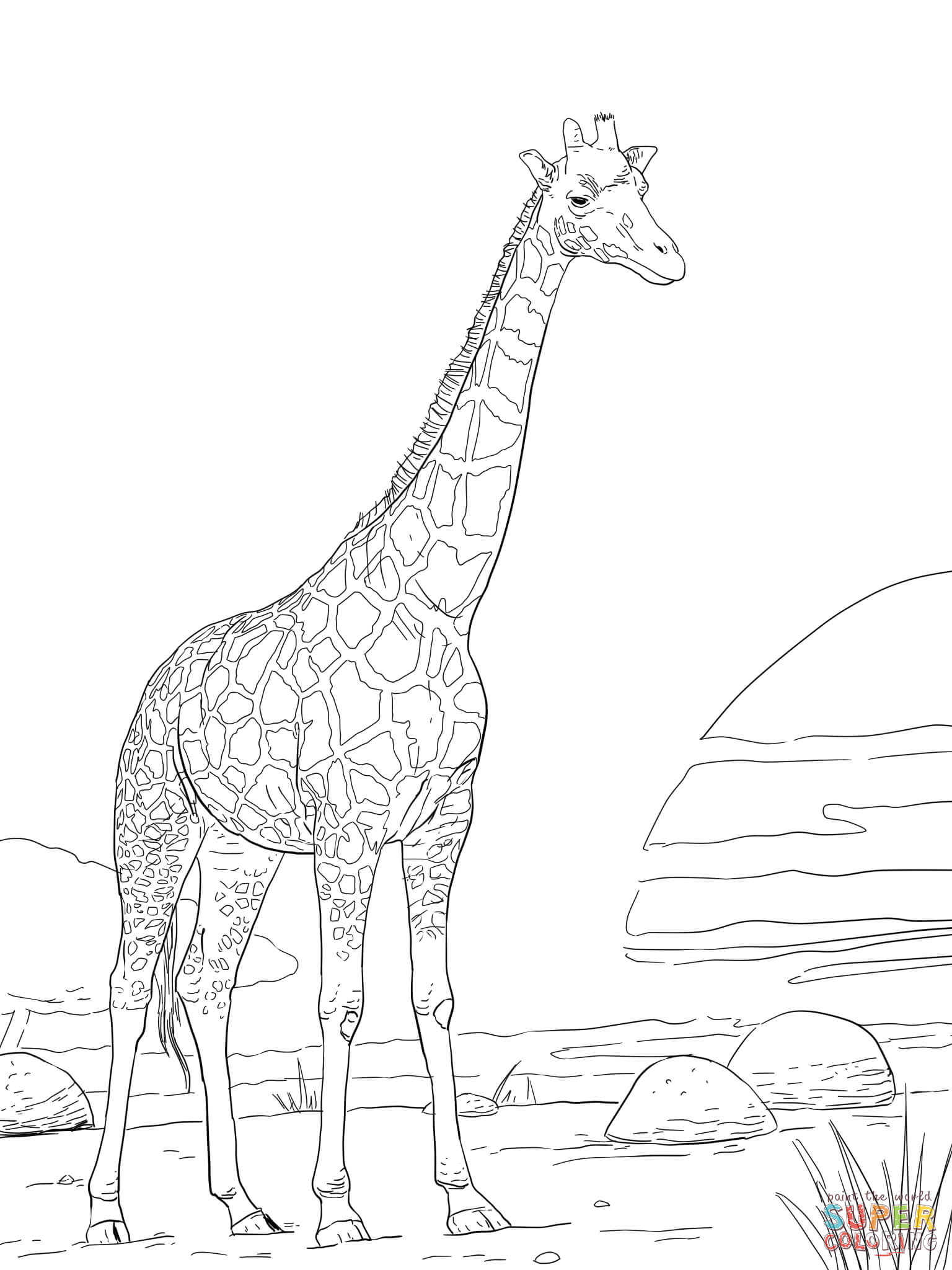 rothschild giraffe coloring page free printable coloring pages