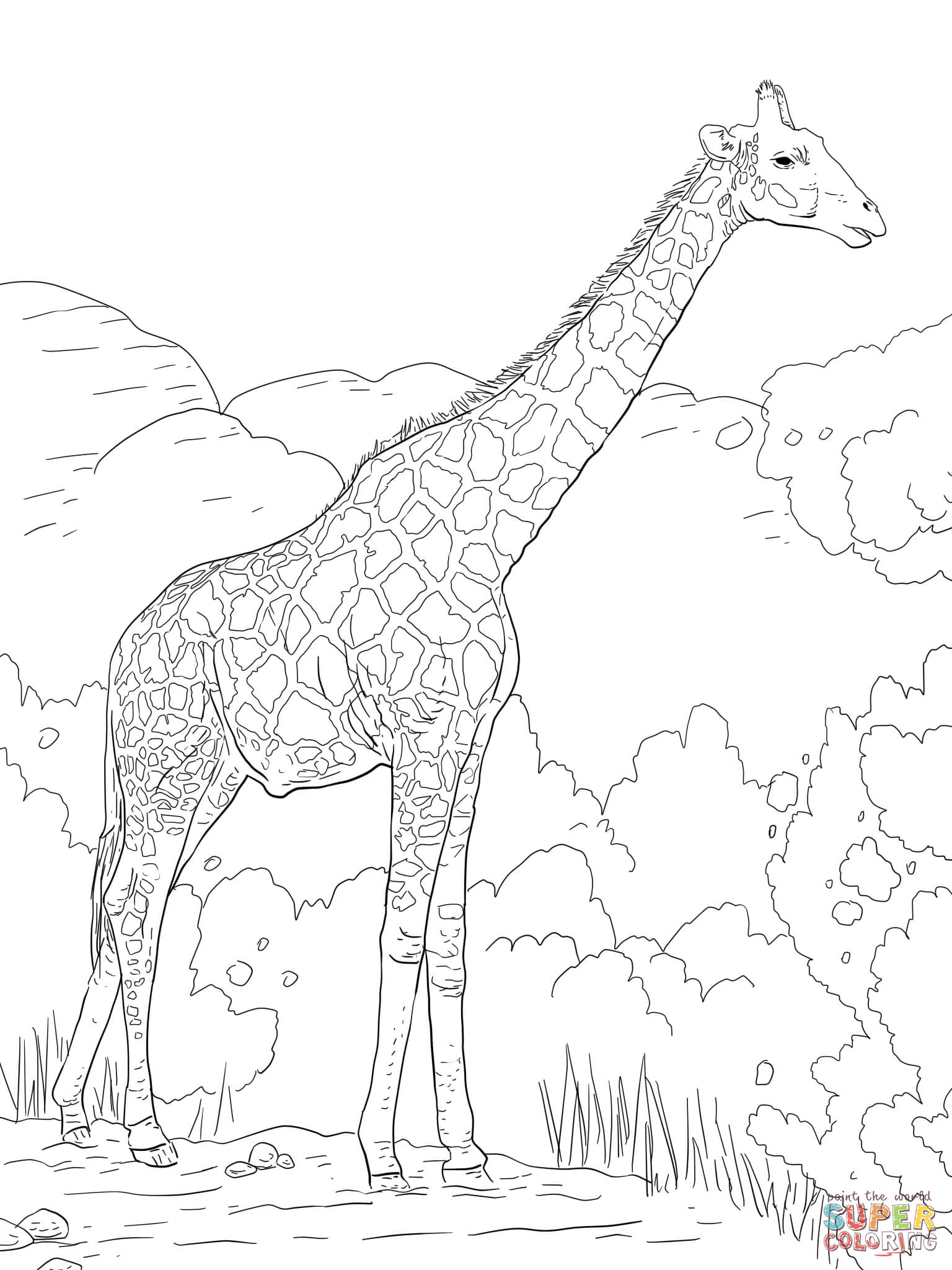 giraffe coloring pages aductk