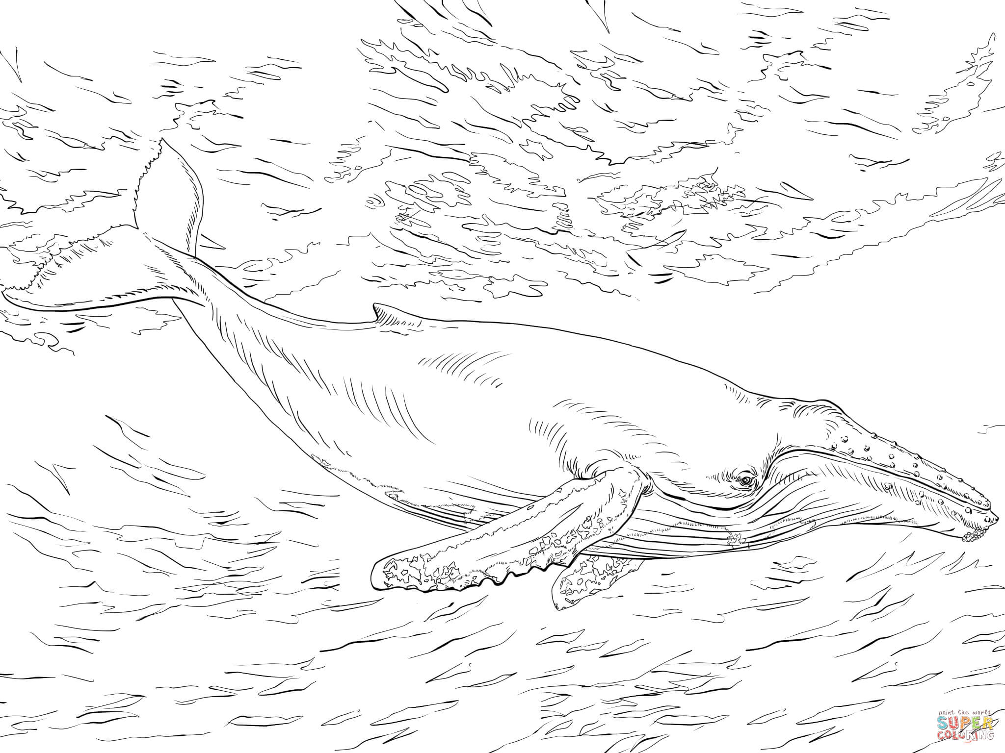 Diving Humpback Whale Coloring Page 2048×1536 Furry Fishy