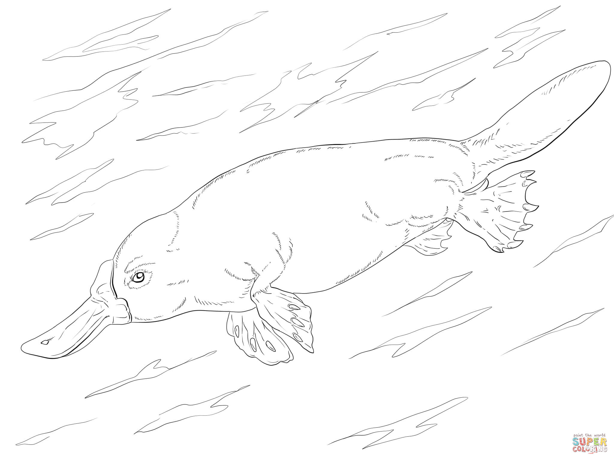 Duck Billed Platypus Swimming Coloring Page