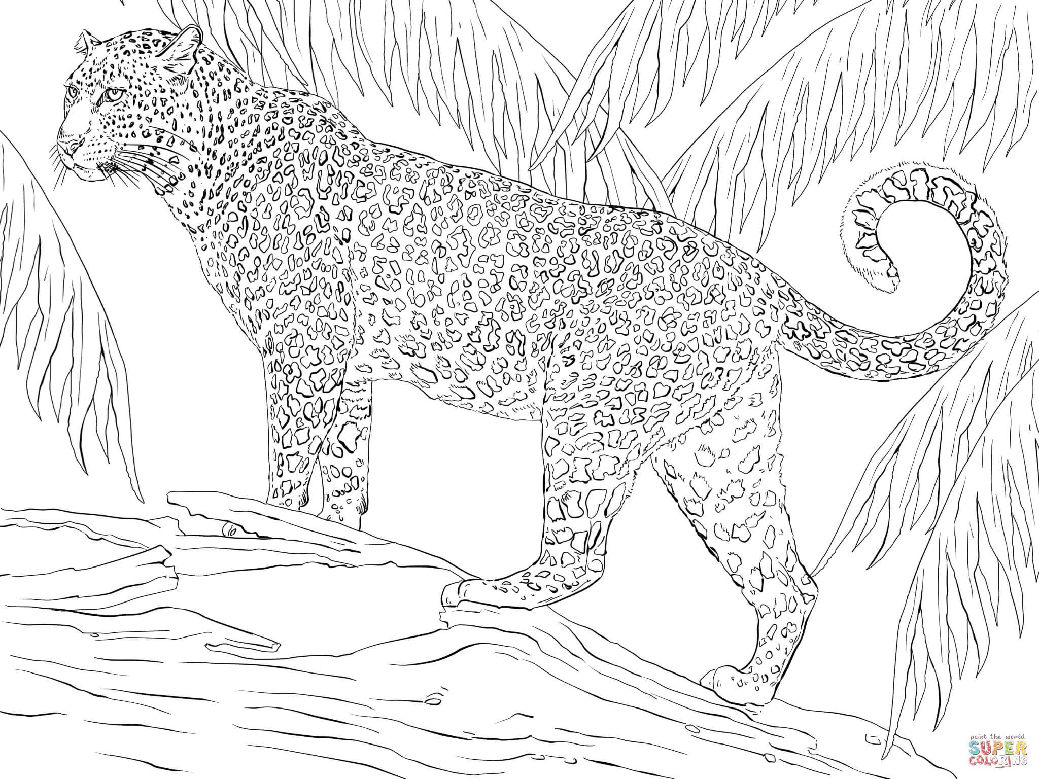 Ausmalbild Jaguar