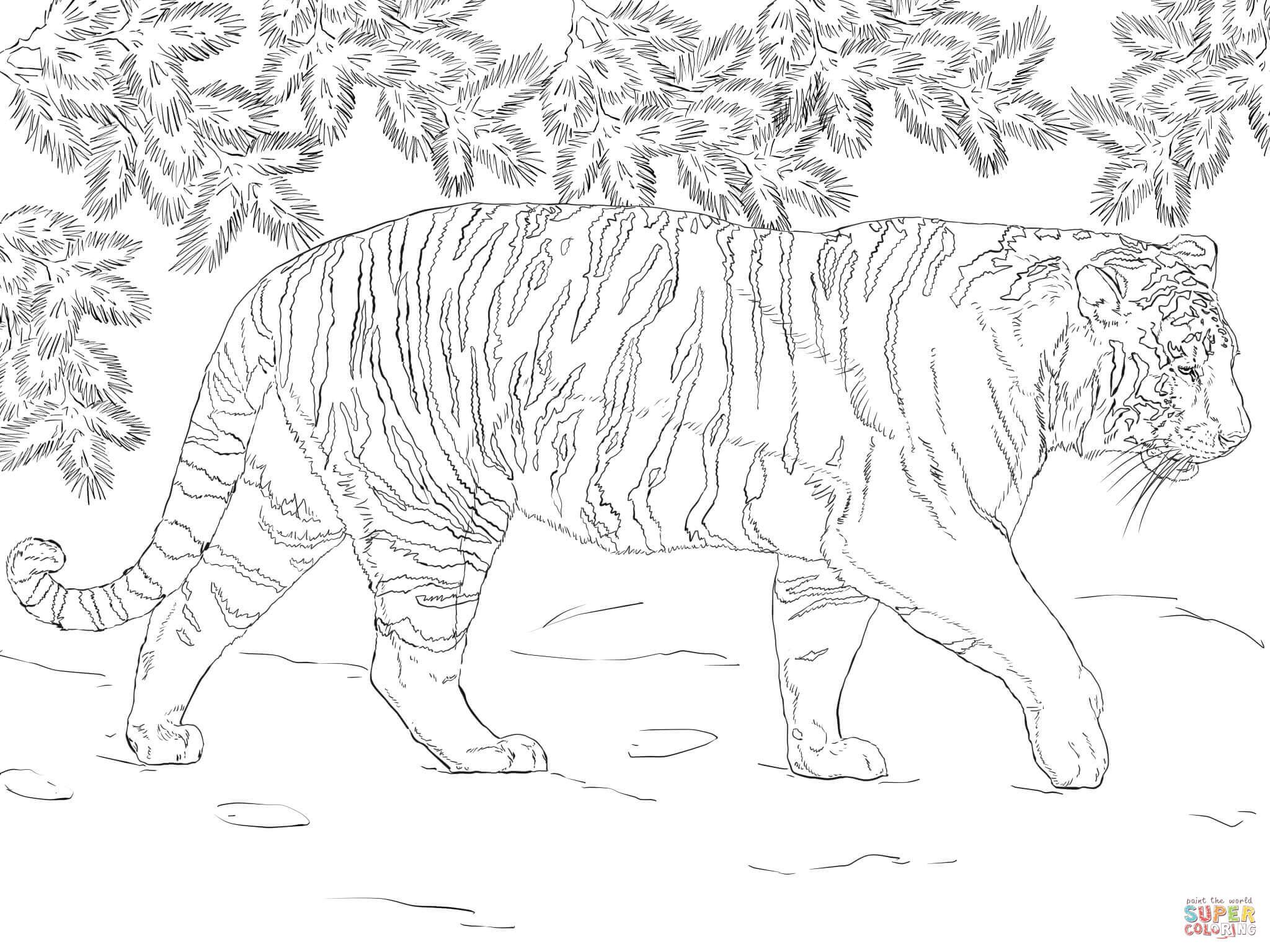 Siberian Tiger Coloring Page