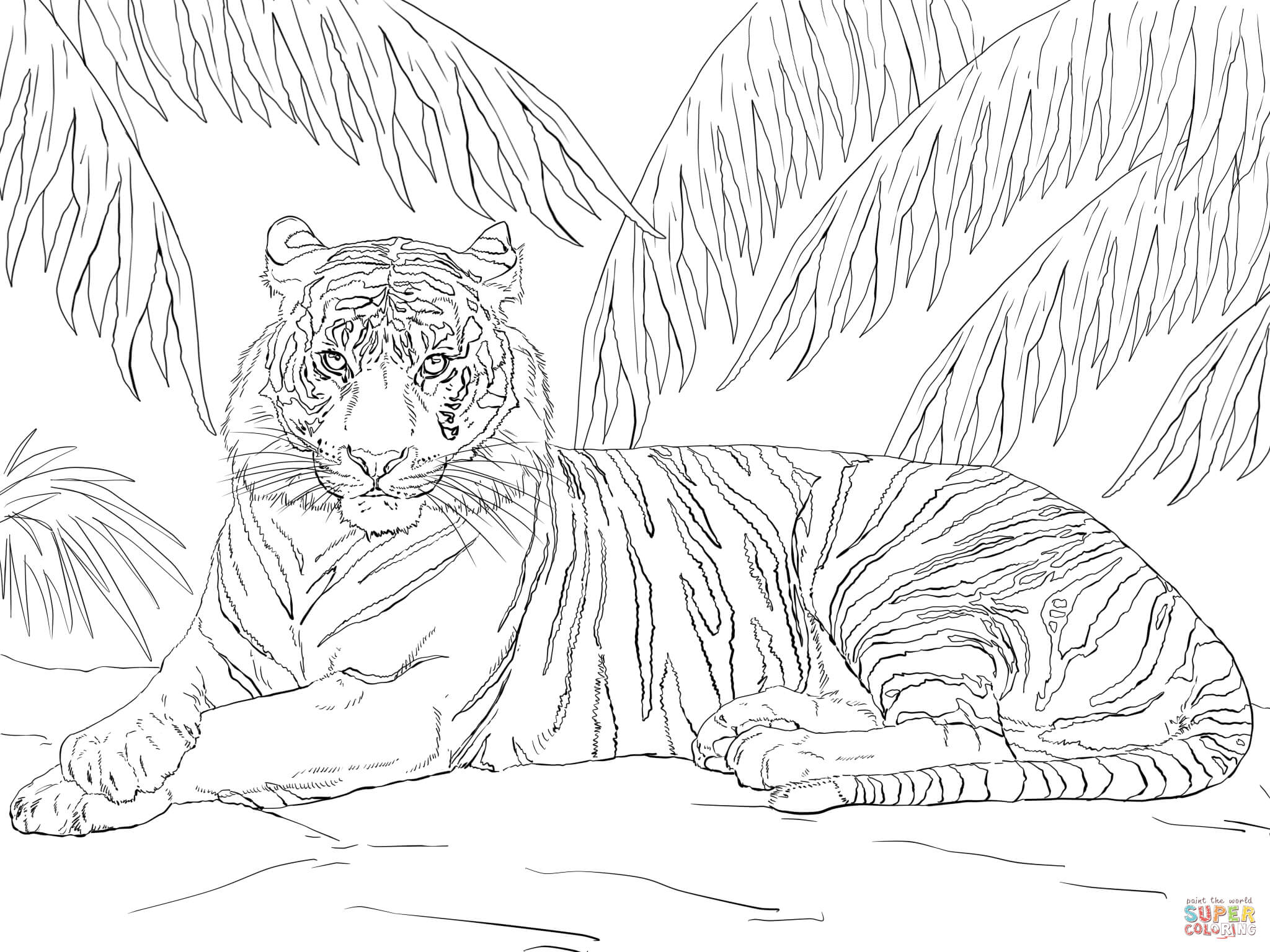 sumatran tiger laying down coloring page free printable coloring