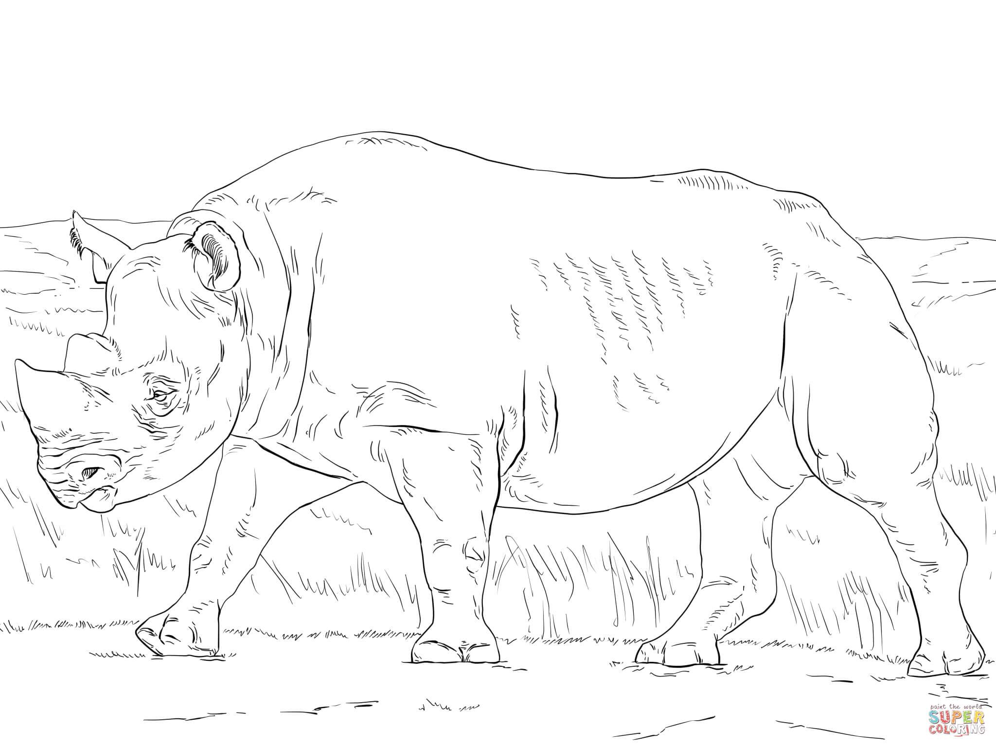 black rhinoceros coloring page supercoloring com