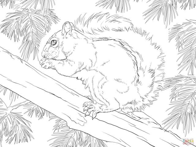 Eastern Grey Squirrel coloring page  Free Printable Coloring Pages