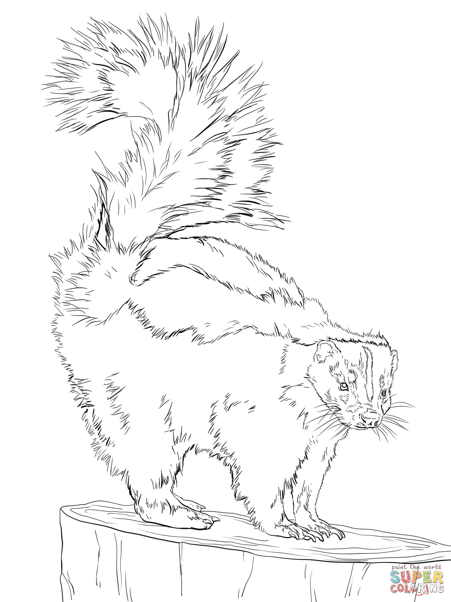 north american striped skunk coloring page supercoloring com