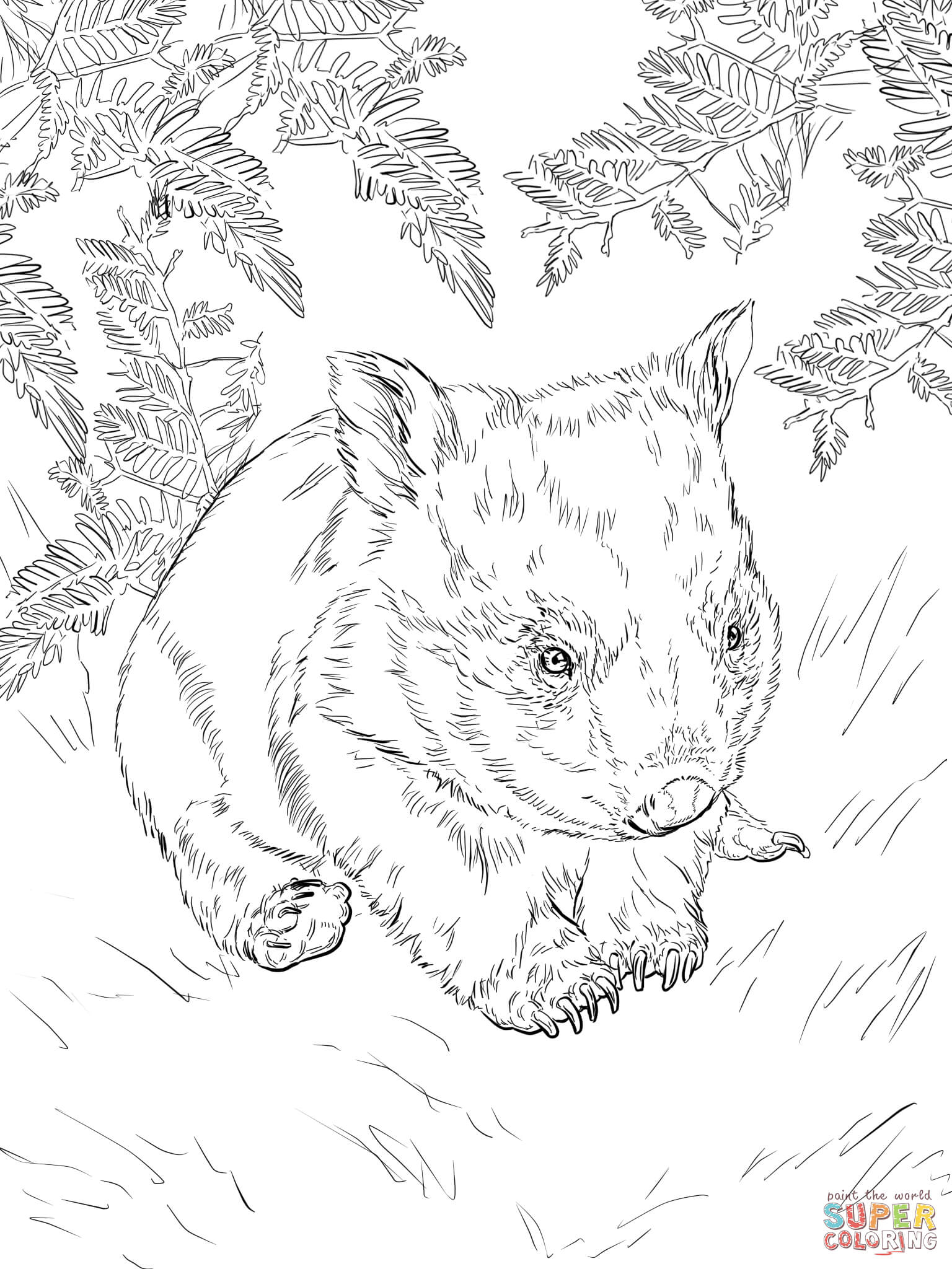 Baby Wombat Coloring Page Free Printable Coloring Pages