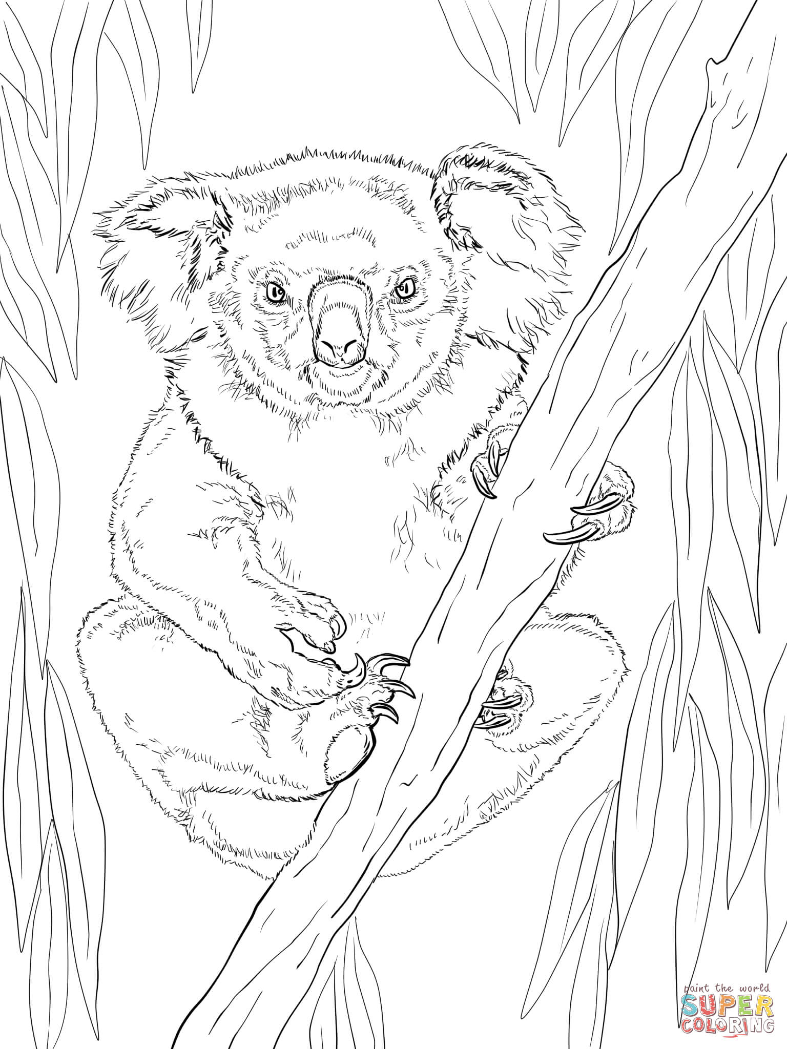 Friendly Female Koala Coloring Page Free Printable Coloring Pages