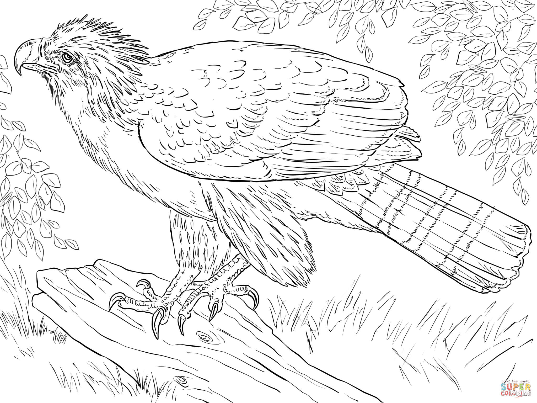 Philippine Eagle Perched On A Branch Coloring Page