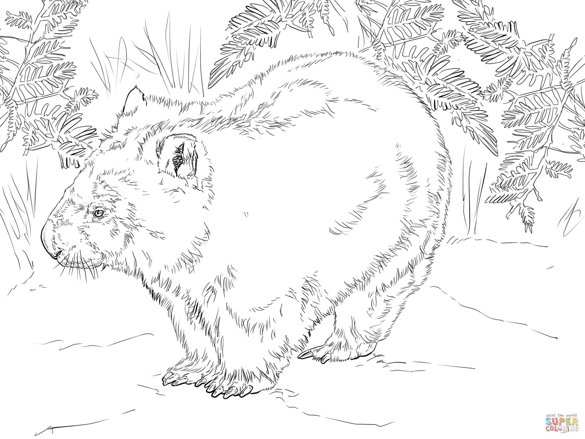 wombat from australia coloring page free printable coloring pages
