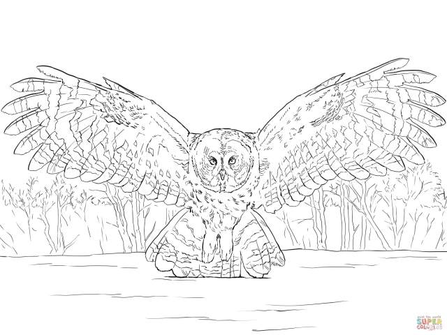 Great Grey Owl Flying coloring page  Free Printable Coloring Pages